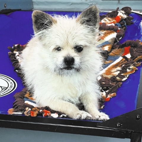 Terry, The Animal Foundation My name is Terry (ID No. A816070), and I'm a sweet, calm 5-year-old male terrier waiting for a family to call my own. I'm a bit reserved with new people but eager  ...
