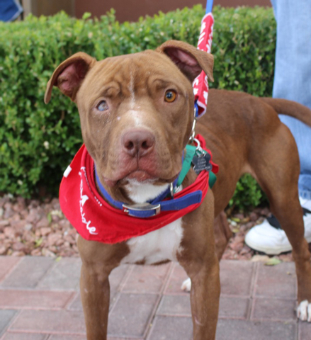 Gulliver, Animal Network Sweet Gulliver was used as a bait dog but has not let his horrible past dampen his loving personality. He is a goofy, sweet boy who wants to please and be loved. He does w ...