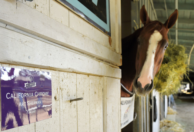 California Chrome was the latest Triple Crown hopeful to come up short at the Belmont. Here, the horse looks on from the barn at Santa Anita Race Track on Oct. 27, 2014. (AP Photo/Mark J. Terrill)
