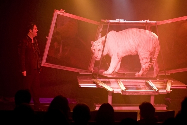Magician Dirk Arthur makes a rare snow tiger appear during his show at O'Sheas, Friday, Dec. 3, 2010. (JERRY HENKEL/LAS VEGAS REVIEW-JOURNAL)
