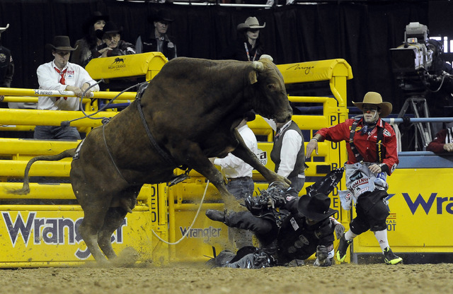 Bull rider Tim Bingham from Honeyville, Utah, is bucked from his bull however, bull decided not to make a charge toward Bingham during the tenth go-round of the National Finals Rodeo at the Thomas ...