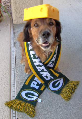 """Bob Lewicki of Las Vegas said, """"Barney, a golden retriever mix and a trained therapy dog, likes nothing more than to watch the Green Bay Packers win on Sunday afternoons."""""""