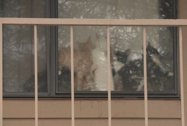 The Arizona Humane Society removed 60 cats and two dead kittens from an east Phoenix apartment Thursday afternoon, Dec. 18, 2014. (CNN)