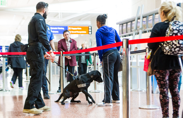 Passenger screening canine Ozzy, a labrador retriever, detects a decoy as lead explosives detection K-9 handler Timothy Webb holds the leash at the Terminal 3 TSA checkpoint at McCarran Internatio ...