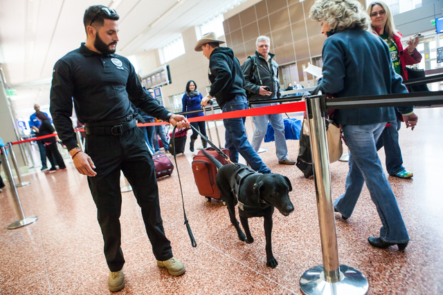 Lead explosives detection K-9 handler Timothy Webb, left, works with passenger screening canine Ozzy, a labrador retriever, as passengers walk through the Terminal 3 TSA checkpoint at McCarran Int ...