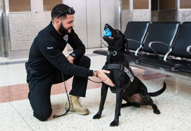 Lead explosives detection K-9 handler Timothy Webb interacts with passenger screening canine Ozzy, a labrador retriever, after giving him a toy as a reward for detecting a decoy at the Terminal 3  ...