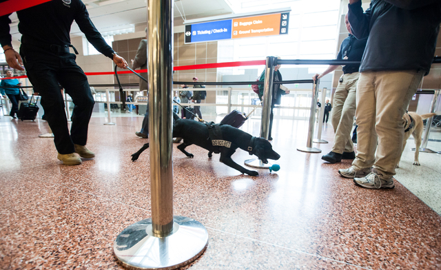 Lead explosives detection K-9 handler Timothy Webb holds the leash of passenger screening canine Ozzy, a labrador retriever, after giving him a toy as a reward for detecting a decoy at the Termina ...