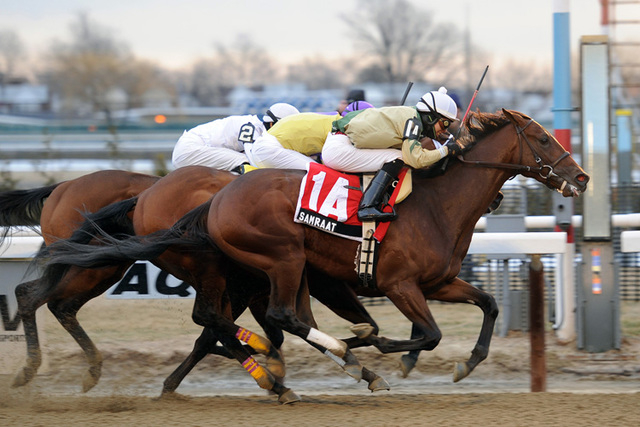 In this photo provided by the New York Racing Association, Samraat, with Jose L. Ortiz aboard, captures the Gotham Stakes horse race at Aqueduct Racetrack in New York, Saturday, March 1, 2014. (AP ...