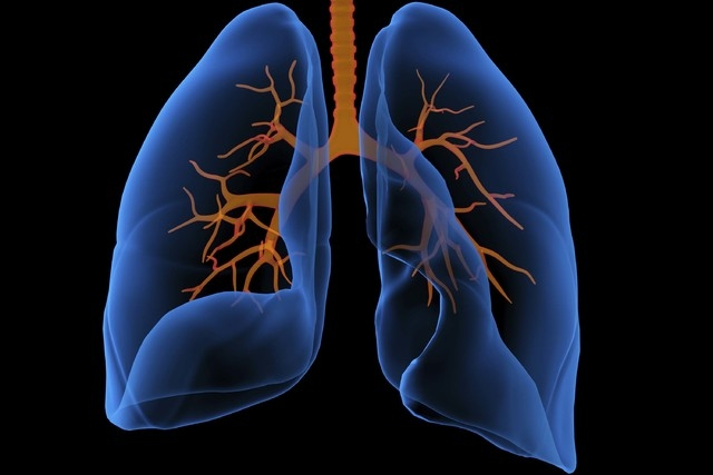 A 3D medical illustration shows the lungs from the front. (Thinkstock)