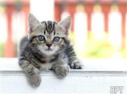 Fascinating felines: The surprising truths about 5 common cat myths
