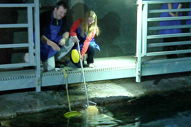 forget the scares feeding sharks is fun las vegas review journal