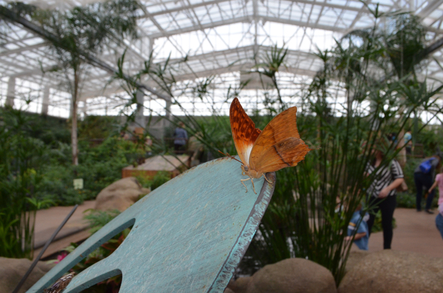The highlight of Butterfly Wonderland is the 10,000 square foot butterfly and plant packed atrium. The attraction is one of the newest in Scottsdale, Ariz. (Ginger Meurer/Las Vegas Review-Journal)