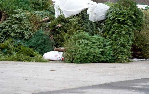 Christmas Tree Dumping Ground