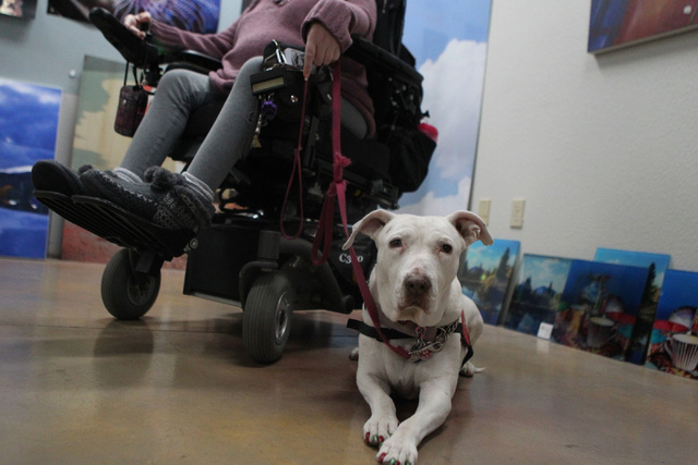 Peewee, a 12-year-old therapy pit bull, sits next to her owner Kelly McMahon, director of the Hearts Alive Village Las Vegas, at Pictographics, 4830 W. Oquendo Road, in Las Vegas Thursday, Dec. 11 ...