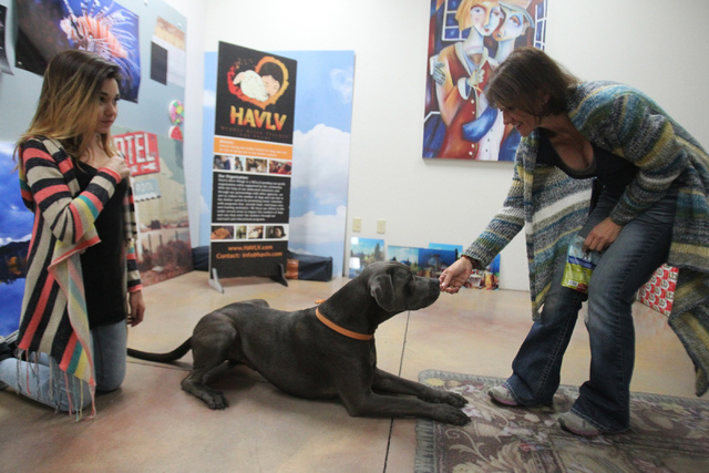 Kendall Stevens, left, 12, watches her mother Christy, founder of Hearts Alive Village Las Vegas, interact with King, a 3-year-old rescued labrador-mix, at Pictographics, 4830 W. Oquendo Road, in  ...