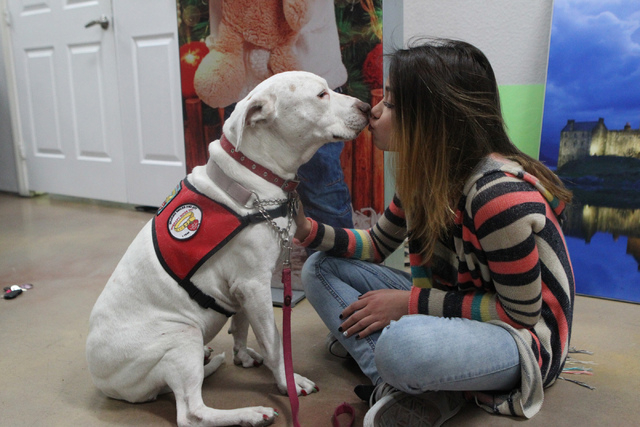 Kendall Stevens,12, kisses Peewee, a 12-year-old therapy pit bull, at Pictographics, 4830 W. Oquendo Road, in Las Vegas Thursday, Dec. 11, 2014. The non-profit organization which helps shelter dog ...