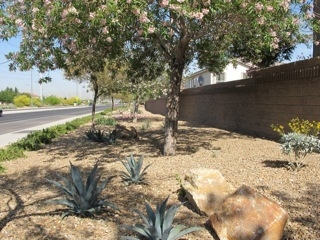 Henderson Resident Debra Jacobson Worked With Her Homeowners Association  For Three Years To Design And Landscape