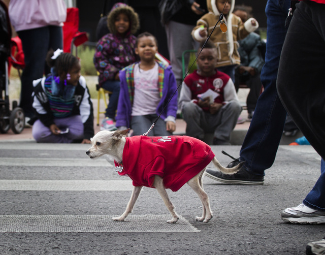 Papi Maximous ,the dog, walks Monday, January 19 2015 during the 33rd Annual Dr. Martin Luther King Jr. Parade in Downtown Las Vegas. (Jeff Scheid/Las Vegas Review-Journal)