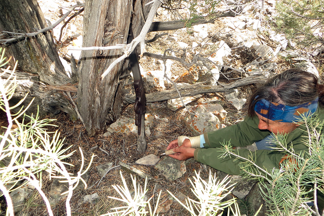 In an undated photo from early November, park archaeologist Eva Jensen prepares to recover a 132-year-old Winchester rifle from beneath a tree in a remote part of Great Basin National Park. (Court ...