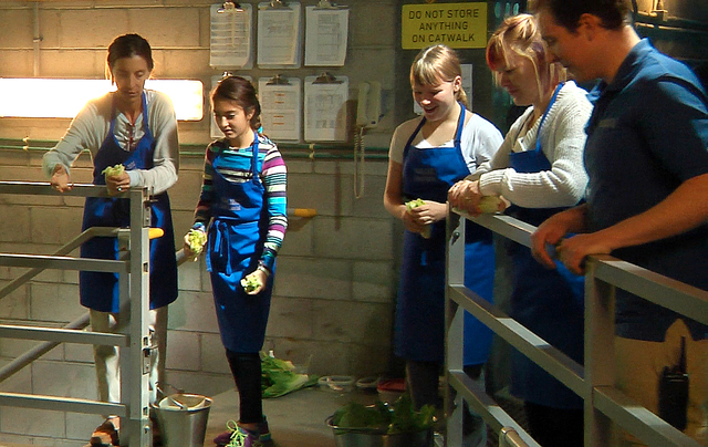 Judee and Bella Depasquale and Rae Anne and Jacquie Martin with Shark Reef Aquarium guide, Matt Malinowski, feed lettuce to sea turtles at Mandalay Bay Resort and Casino on Wednesday, December 31, ...