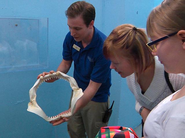 Shark Reef Aquarium guide, Matt Malinowski, shows Jacquie and Rae Anne Martin how a shark's teeth grow at Mandalay Bay Resort and Casino on Wednesday, December 31, 2014. (Michael Quine/Las Vegas R ...