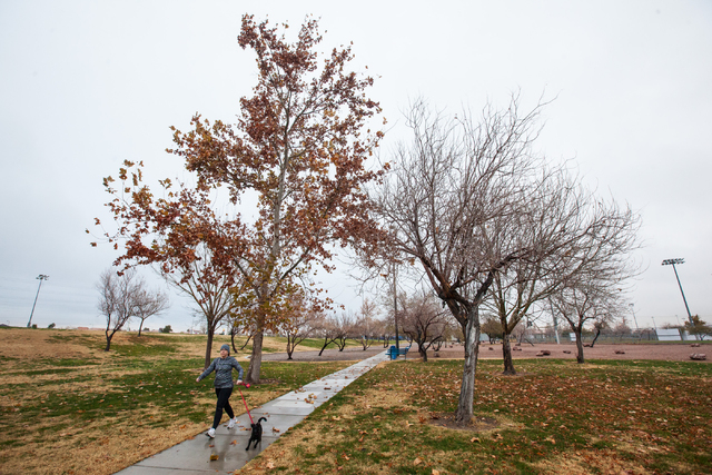 Heidi Griffith runs on a path with her dog Molly, a terrier mix, following an early morning rain at Desert Breeze Park in Las Vegas on Tuesday, Jan. 27, 2015. (Chase Stevens/Las Vegas Review-Journal)