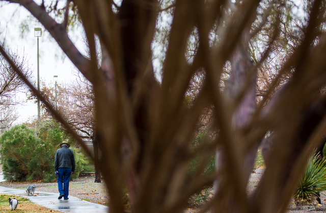 Thomas, last name declined, walks with his dogs Tegan, left, and Duncan, following an early morning rain at Desert Breeze Park in Las Vegas on Tuesday, Jan. 27, 2015. (Chase Stevens/Las Vegas Revi ...