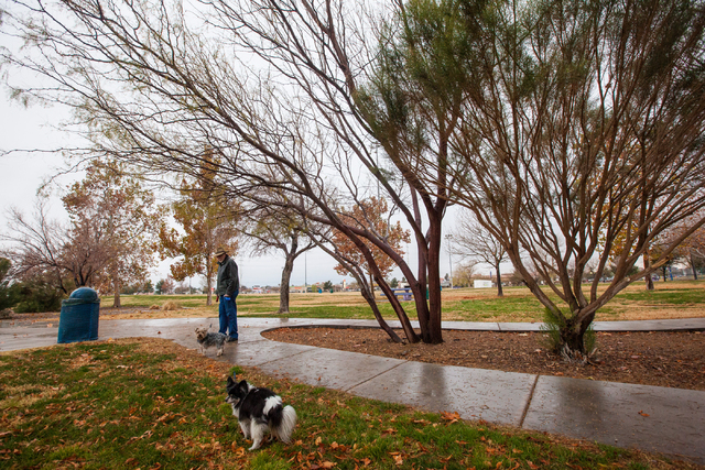 Thomas, last name declined, walks with his dogs Tegan, in the foreground, and Duncan, following an early morning rain at Desert Breeze Park in Las Vegas on Tuesday, Jan. 27, 2015. (Chase Stevens/L ...