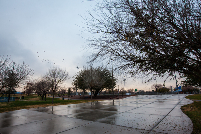 A flock of birds, center left, fly around following an early morning rain at Desert Breeze Park in Las Vegas on Tuesday, Jan. 27, 2015. (Chase Stevens/Las Vegas Review-Journal)
