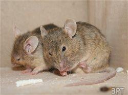 Don't play cat-and-mouse with rodents: Tips to keep your home pest-free