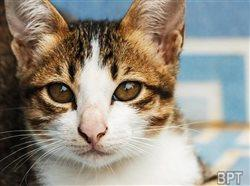 How to reduce unwanted litters and end shelter deaths for kittens nationwide