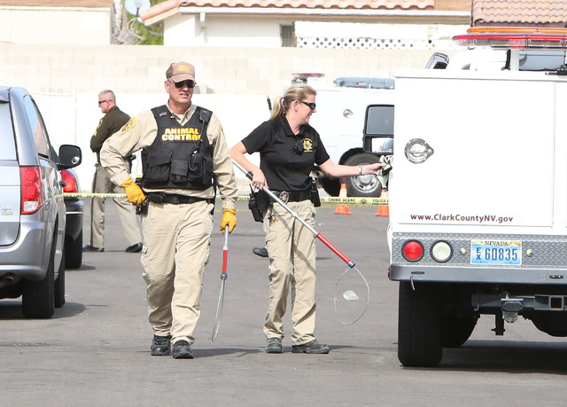 Clark County animal control officers arrive at a house where two people were attacked by four dogs in the 900 block of Looking Glass Lane, near Bonanza Road and Sloan Lane, on Friday, Feb. 20, 201 ...