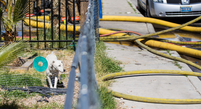 A small dog watches as Las Vegas Fire & Rescue firefighters and officials respond to a house fire that left the home gutted, near Rancho and Vegas drives in Las Vegas on Friday, Feb. 27, 2015. One ...