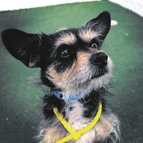 Tucker, The Animal Foundation My name is Tucker (ID No. A827877), and I'm a 4-year-old male terrier who can't wait to meet the human to call my own! I'd love to steal your hugs and kisses in ...