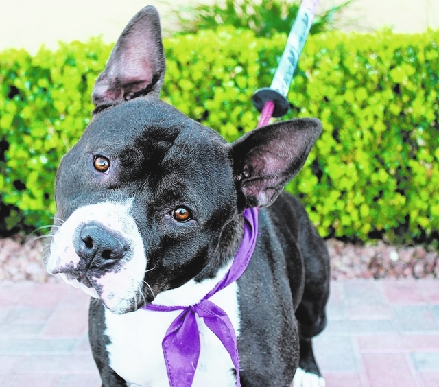 Shadow Garcia, Animal Network Shadow Garcia is a very sweet and loving boy. He was found as a stray, and no owner came forth. This guy is so friendly! He loves to play and hang out with his humans ...