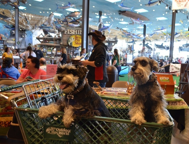 Sophie, left, and Cooper tag along for a shopping trip March 14 at Bass Pro Shops. (Ginger Meurer/View)