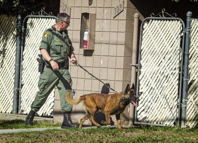 Las Vegas police K-9 officer search for hit and run suspects on Kendale Street near Karen Avenue on Monday, March 30,2015. Two people were detained in the accident that injured three people at a b ...