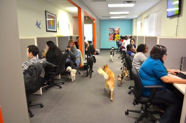 Dogs have their run of the place at Intelicare Direct. (Ginger Meurer/View)