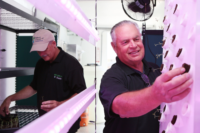 Indoor Farms of America principals David Martin, left, and Ronald Evans work to fill a vertical aeroponic growing panel lit by LED grow lights with arugula plugs containing polymer and peat moss i ...