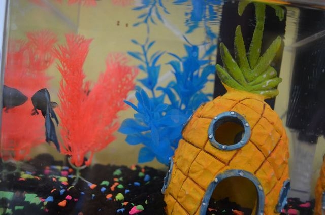 FiFi, a fish at The Firm Public Relations & Marketing, has her own Twitter handle @fifitheprfish. (Ginger Meurer/View)