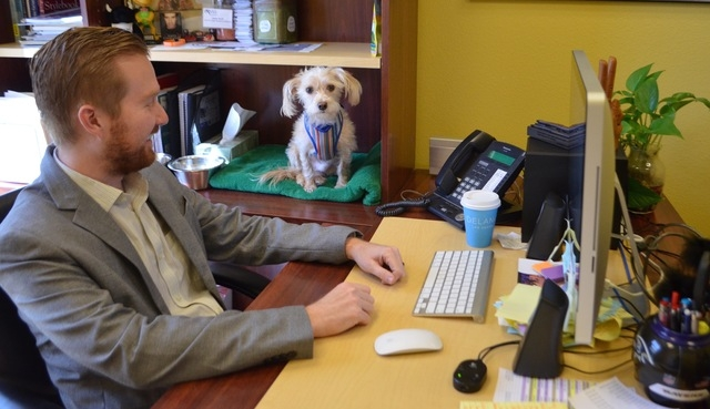 Senior public relations specialist Jesse Scott brings his dog Sammy to the office at The Firm Public Relations & Marketing, 6157 S. Rainbow Blvd., a few times a month. (Ginger Meurer/View)