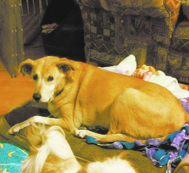 Jada, Happy Home Jada is a 9-year-old Labrador/retriever mix. Jada is a sweet and calm girl looking for her forever home. Her previous owner was too ill to take care of her anymore. Jada is a litt ...