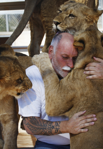 Owner and animal trainer Keith Evans interacts with 11-month-old lions at the Lion Habitat Ranch in Henderson on Oct. 15, 2013. (Jason Bean/Las Vegas Review-Journal file)
