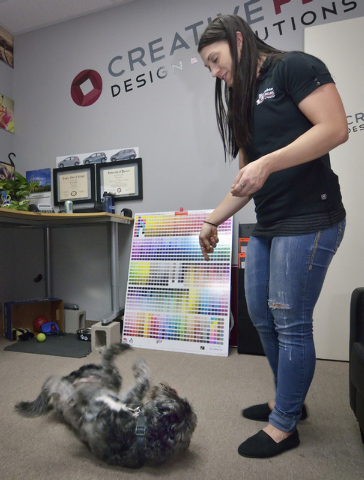 Leroy rolls over before getting a treat from his owner, Desirae Smith, creative director at Reliable Banner, during Fluffy Fridays at the company offices at 2410 N. Decatur Blvd. in Las Vegas on F ...