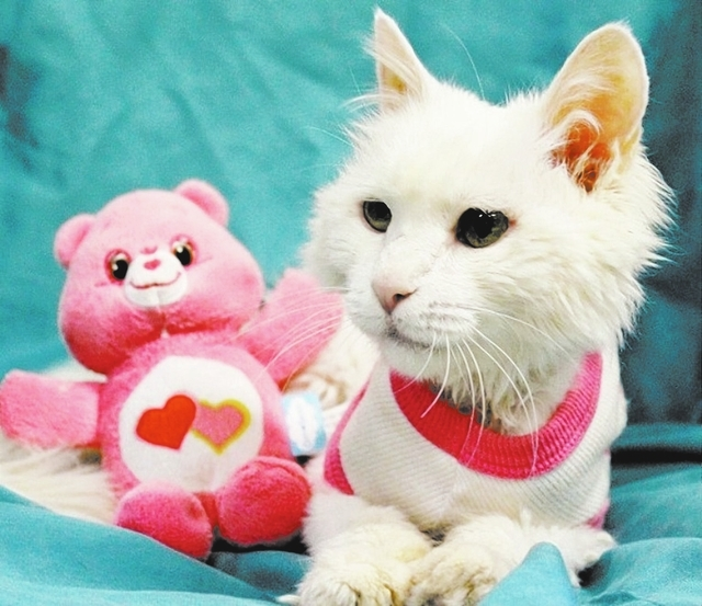 Vanilla Bean, Nevada SPCA Before my rescue, I was perilously emaciated from starvation. My spirit remained strong, and now my body is recovering, too. I'm an angel named Vanilla Bean, asking for ...