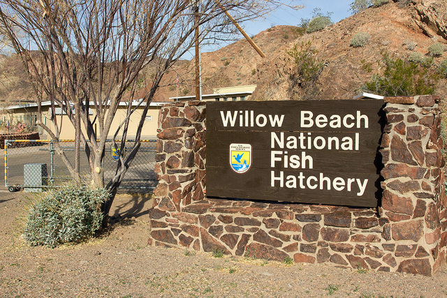 The entrance to Willow Beach National Fish Hatchery, located in Mohave County, Arizona  on Thursday, Feb. 6, 2014. The hatchery stopped raising rainbow trout, a non-native fish species, in Novembe ...