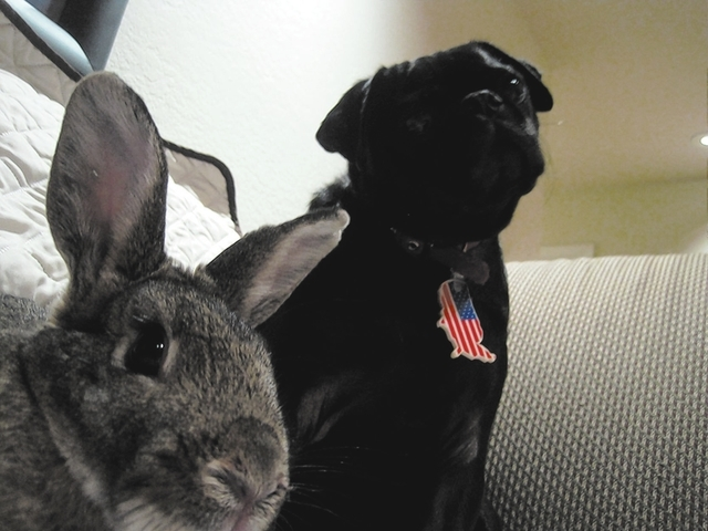 Chris Haraway of Spring Valley shared this photo of Trixie, left, and Inky. CLICK THE IMAGE FOR MORE PHOTOS.
