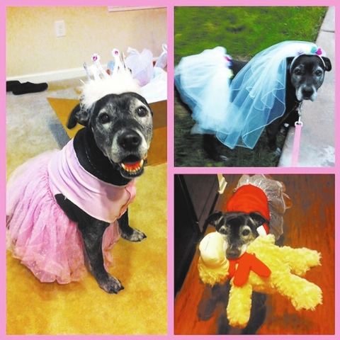 """Chantelle Majors of Las Vegas said, """"This is my baby, Tila. She was adopted from Friends For Life in March 2009 after spending almost two years there. She is the love of my life and brings joy t ..."""