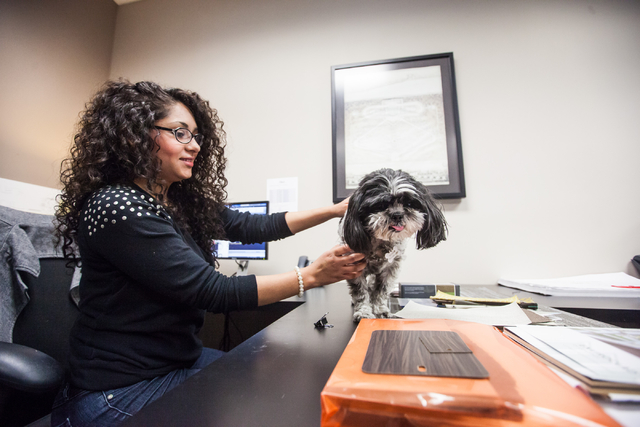 Carina Gayton, an interior design assistant, pets Pepper, a 7-year-old Shih Tzu owned by Ed Vance, at architecture firm Ed Vance & Associates Architects, Feb. 27, 2015. (Chase Stevens/View)