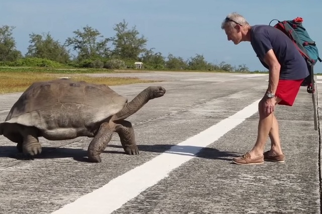 A giant tortoise backs down National Geographic expedition leader Paul Rose. (Screengrab/Youtube)